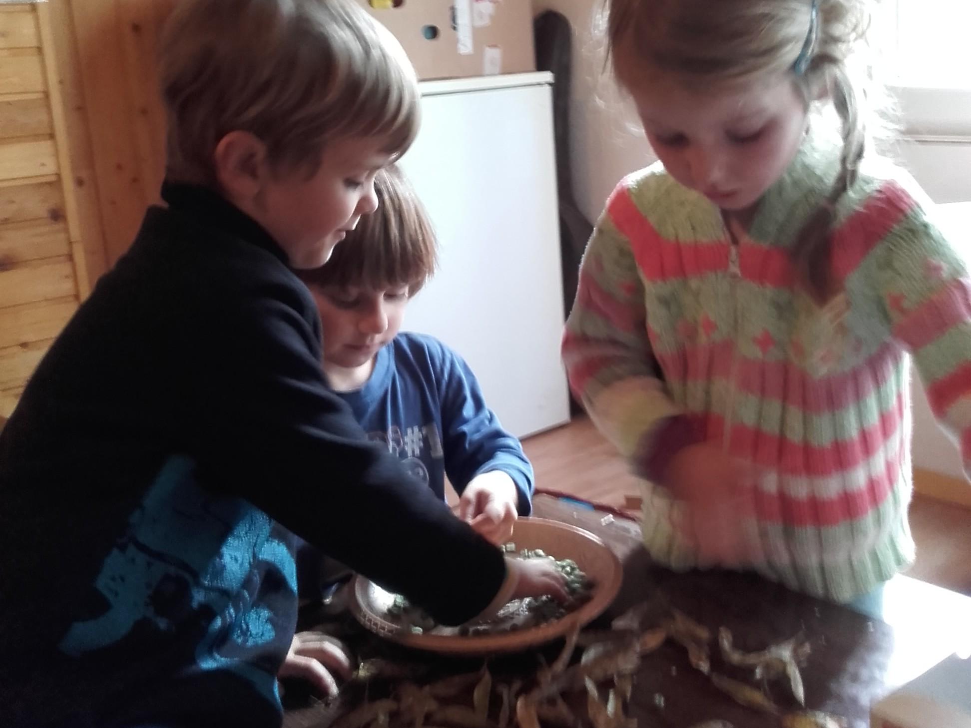 Luštění semen hrachu, lesní klub Oříšek