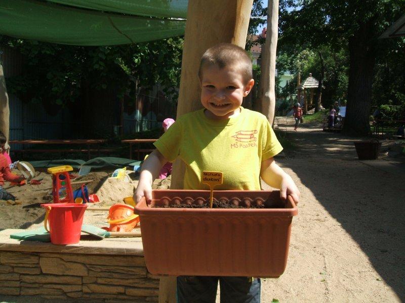 Některé druhy je lepší pro jistotu předpěstovat v truhlíku, brutnák lékařský v MŠ Pastelky Brno