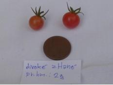 """""""rajče divoké z Hané"""""""