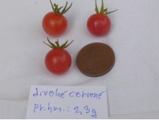 """""""rajče divoké červené"""""""